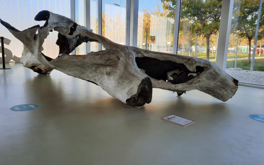 """La obra """"Expansión"""", que se expone en Espacio en blanco, denuncia la deforestación"""