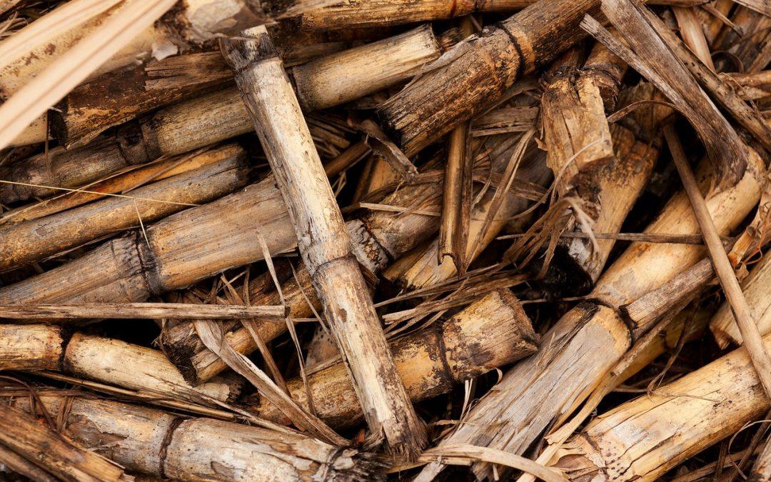 GreenLife concluye proyecto sobre disolventes procedentes de la biomasa