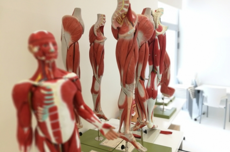 Material de anatomía de la Universidad San Jorge