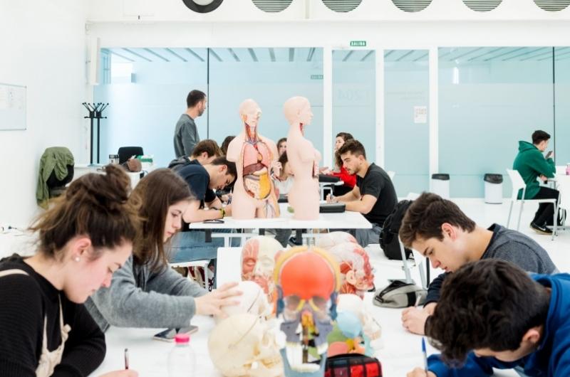 Alumnos del grado de fisioterapia haciendo una práctica en clase